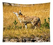 Yellowstone Coyote Tapestry