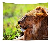 Young Adult Male Lion On Savanna. Safari In Serengeti Tapestry