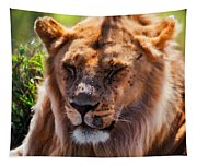 Young Adult Male Lion Portrait. Safari In Serengeti Tapestry