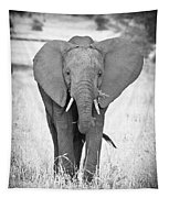 Young Bull Elephant Tapestry
