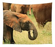 Young Elephant Tapestry