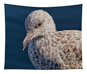 Young Herring Gull Tapestry