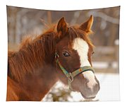 Young Horse In Winter Day Tapestry
