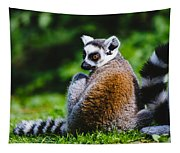 Young Lemur Tapestry