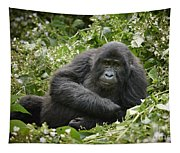 Young Mountain Gorilla Tapestry