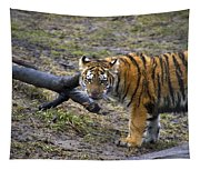 Young Tiger Tapestry