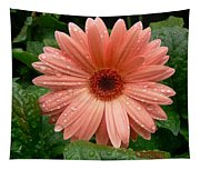 04-19-09 Gerbera Daisy Tapestry