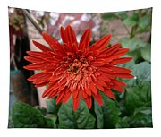 A Beautiful Red Flower Growing At Home Tapestry