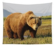 A Brown Grizzly Bear Ursus Arctos Tapestry