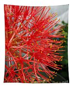 African Blood Lily Or Fireball Lily Tapestry