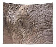 African Elephant Loxodonta Africana Tapestry