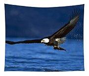 Bald Eagle Haliaeetus Leucocephalus Tapestry