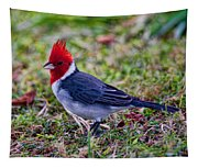 Brazillian Red-capped Cardinal Tapestry
