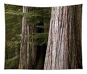 Cedar Trees, Whistler, British Columbia Tapestry