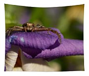 Crab Spider In A Violet Tapestry