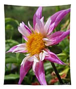 Dahlia Named Lorona Dawn Tapestry