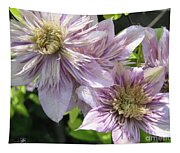 Double Clematis Named Empress Tapestry