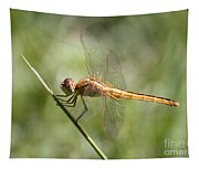 Golden Dragonfly Tapestry