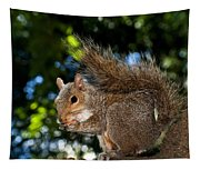 Gray Squirrel Tapestry