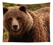 Grizzly Bear, Yukon Tapestry