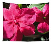 Impatiens Named Dazzler Burgundy Tapestry