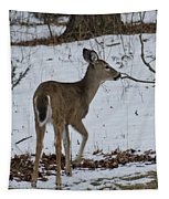 Little White Tail On The Move Tapestry