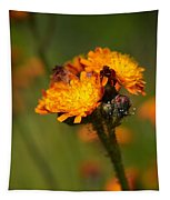 Orange Hawkweed Tapestry