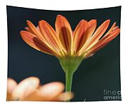 Osteospermum Named Sunadora Palermo Tapestry