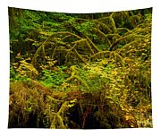 Temperate Rain Forest Tapestry