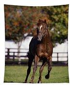 Thoroughbred Horse, Ireland Tapestry