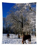 Thoroughbred Horses, Mares In Snow Tapestry