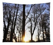 Trees With Sunlight Tapestry