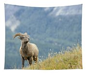 Young Bighorn Sheep, Windy Point Tapestry