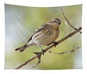 Yellow-rumped Warbler Tapestry