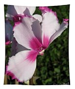 Cyclamen Named Victoria Tapestry
