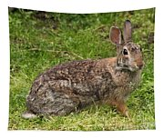 Rabbit Tapestry