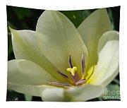 Tulip Named Perles De Printemp Tapestry
