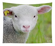 Young Sheep Tapestry