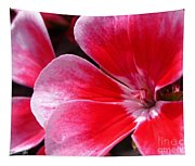 Zonal Geranium Named Candy Fantasy Kiss Tapestry