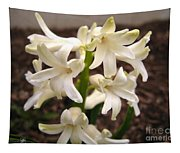Hyacinth Named Aiolos Tapestry