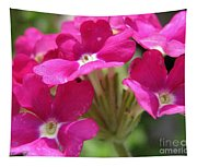Verbena From The Ideal Florist Mix Tapestry