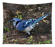 Blue-jay Tapestry