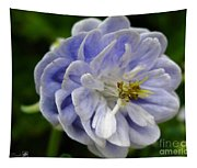 Double Columbine Named Light Blue Tapestry
