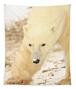 Polar Bear, Churchill, Manitoba Tapestry