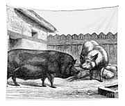 Swine, 19th Century Tapestry
