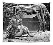 Zebras In Black And White Tapestry