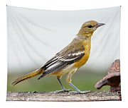 Oriole Tapestry