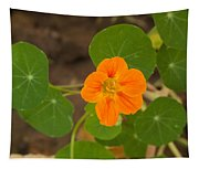 A Beautiful Orange Trumpet Shaped Flower With Green Leaves Tapestry