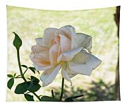 A Beautiful White And Light Pink Rose Along With A Bud Tapestry