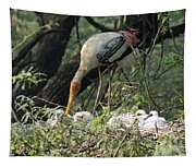 A Painted Stork Feeding Its Young At The Delhi Zoo Tapestry